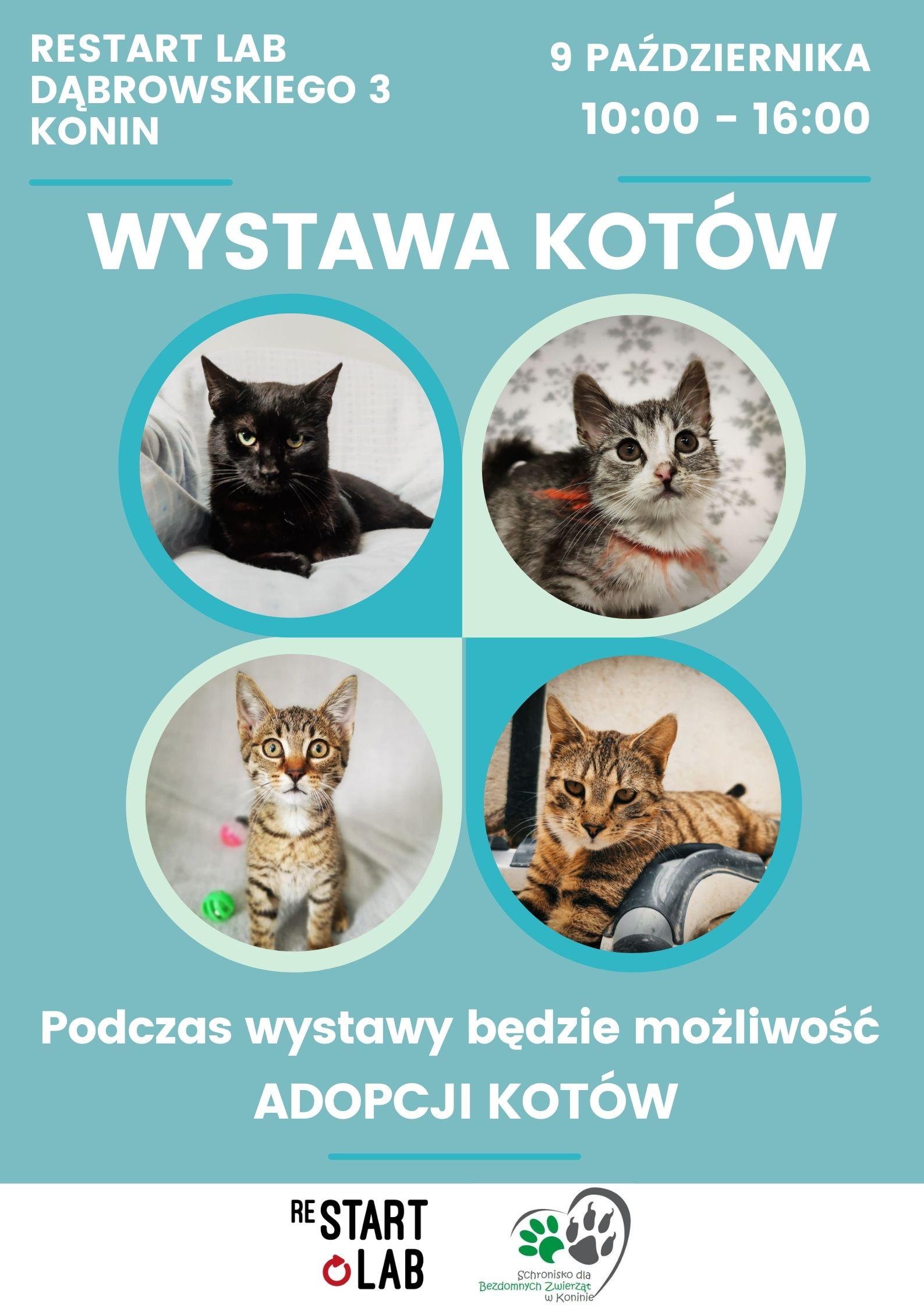 Restart Lab. Wystawa Kotów nierasowych z możliwością adopcji